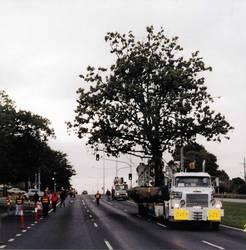 Large Tree Transport